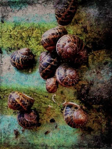 snails on fiberglass